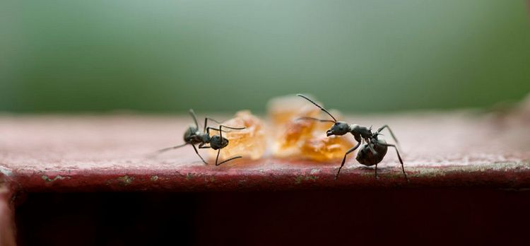 How To Get Rid Of Sugar Ants House Method