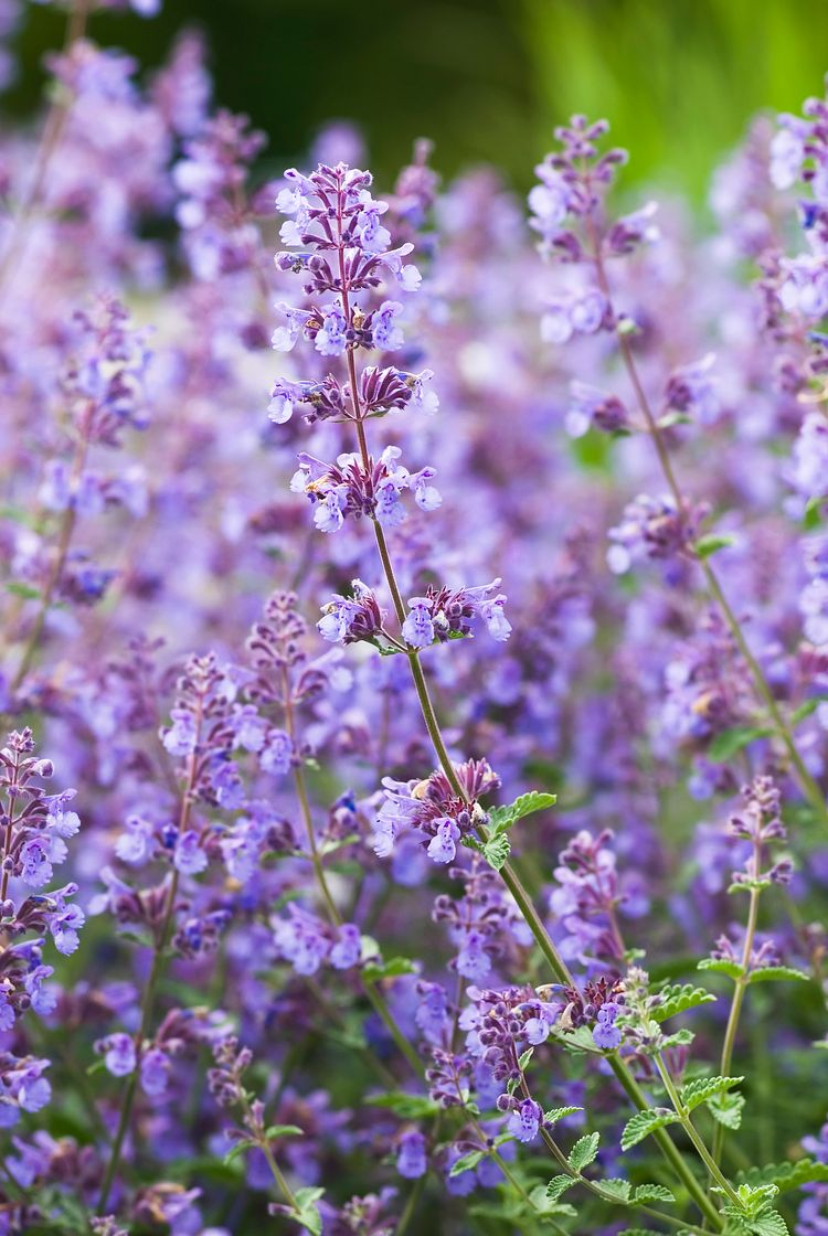 17 Plants That Repel Mosquitoes (and Other Bugs Too)