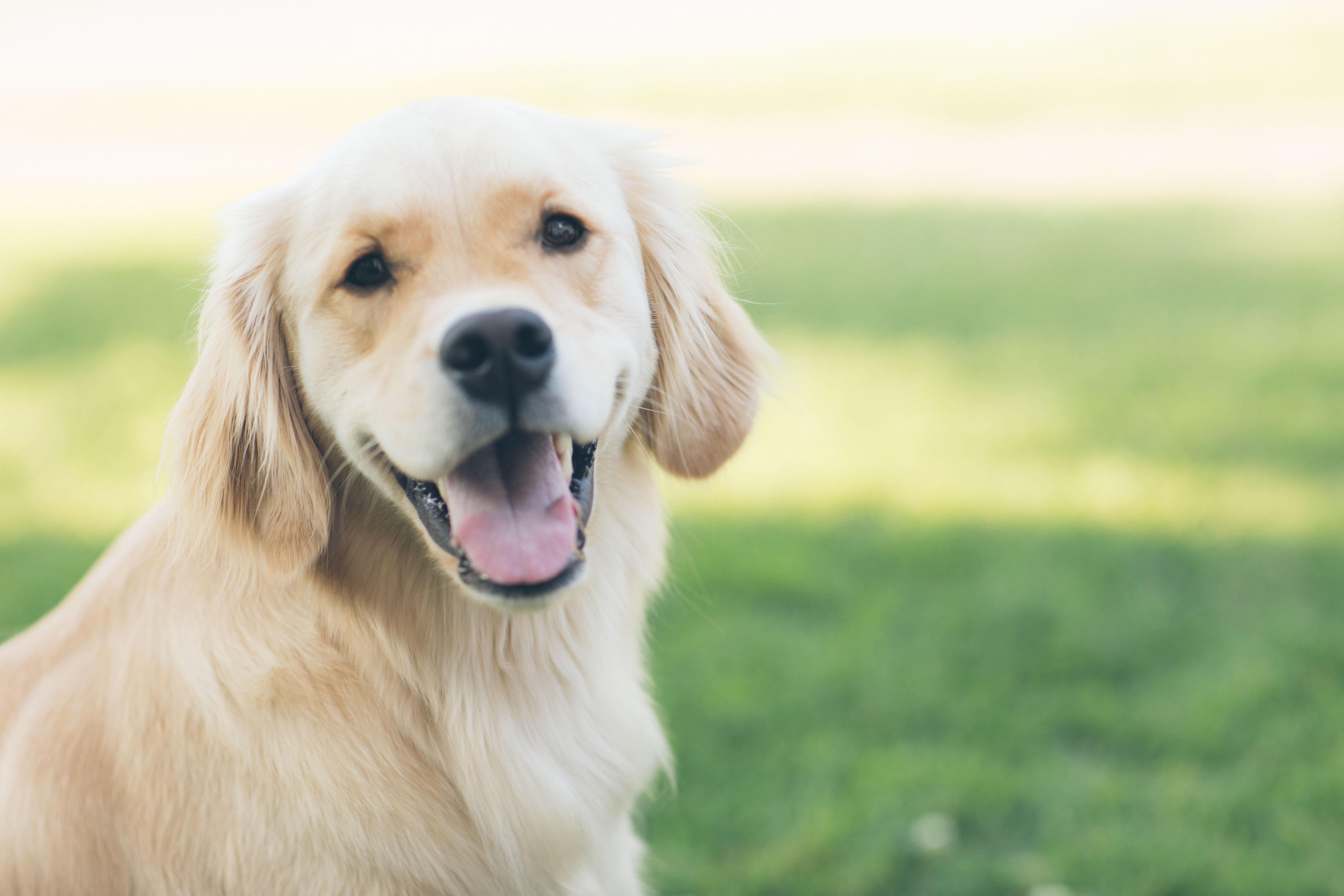 Where To Buy CBD Hemp Pet Treats